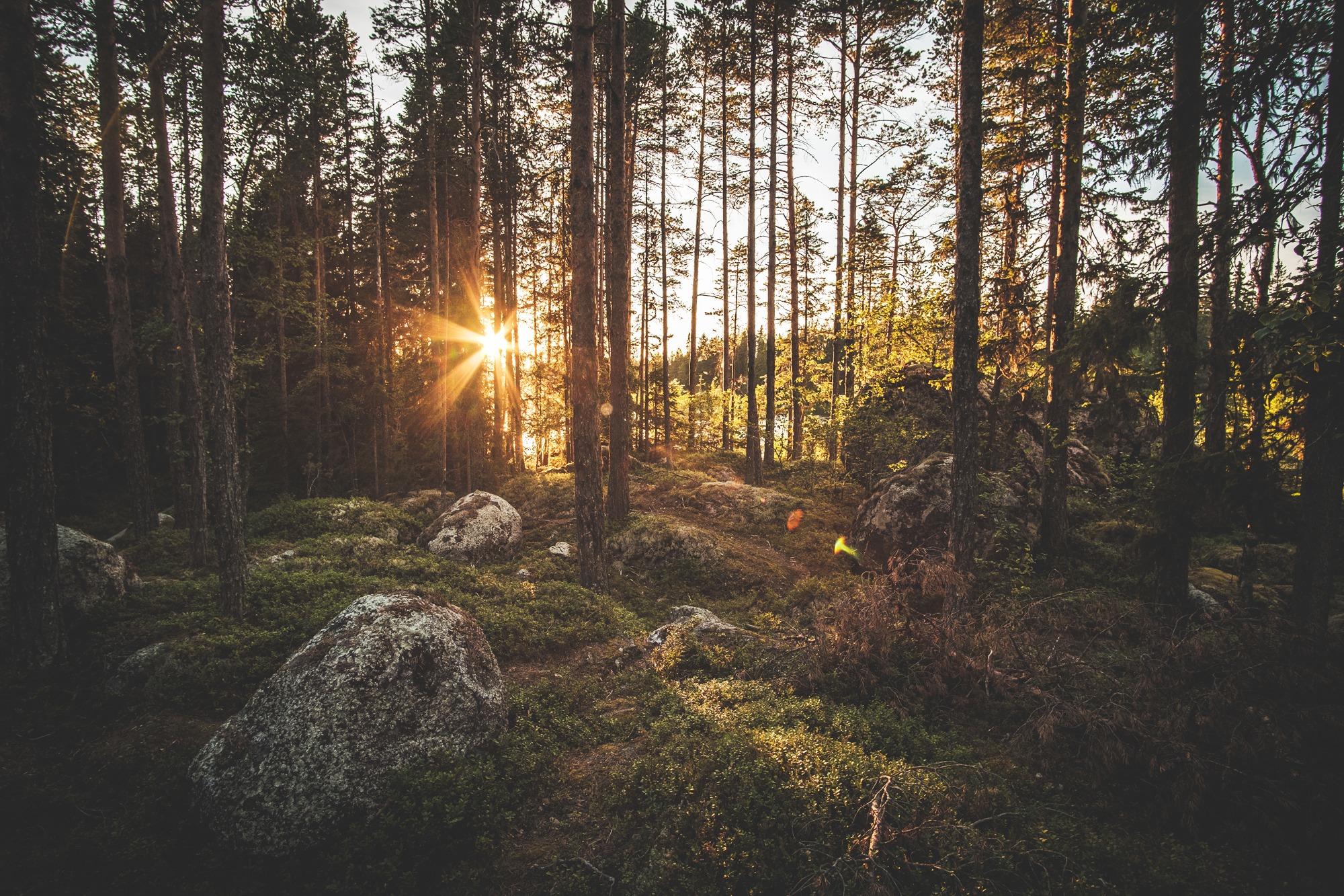 Gimåleden-Gimån-Jämtland-Sverige-4.jpg