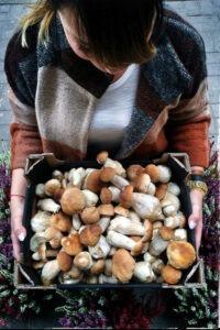 Gimarasten Bracke Sweden Cafe & Restaurant  - Mushrooms