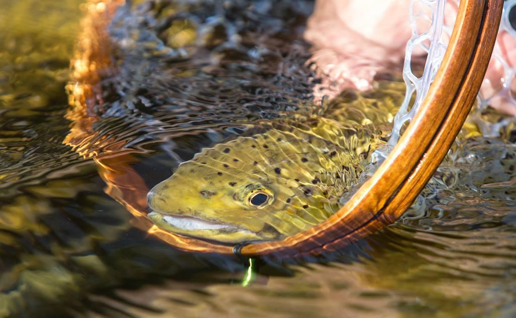 Svanthe-Harström-fly-fishing-Sweden-Gimån-7.jpg